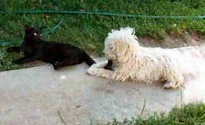 hund trinkt vermehrt